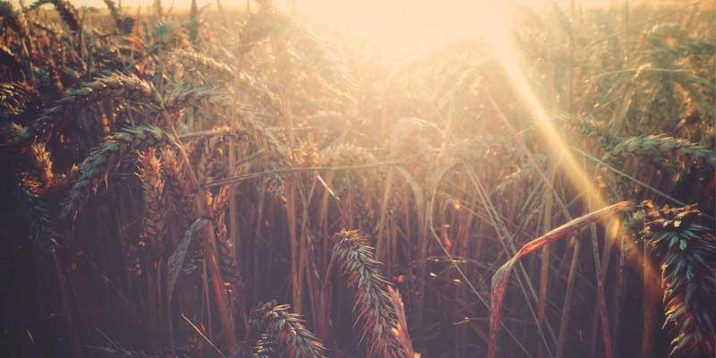 Das Fest der reichen Ernte